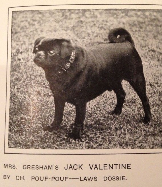 Old Time Pug Picture Google Search Pug Pictures Pugs Cute Pugs