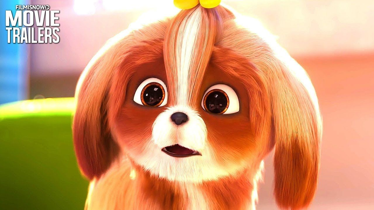 The Secret Life Of Pets 2 Daisy Trailer New Animation 2019 The Secret Life Of Pets 2 The Daisy Trailer Hd Subs Secret Life Of Pets Pets Chill Out Music