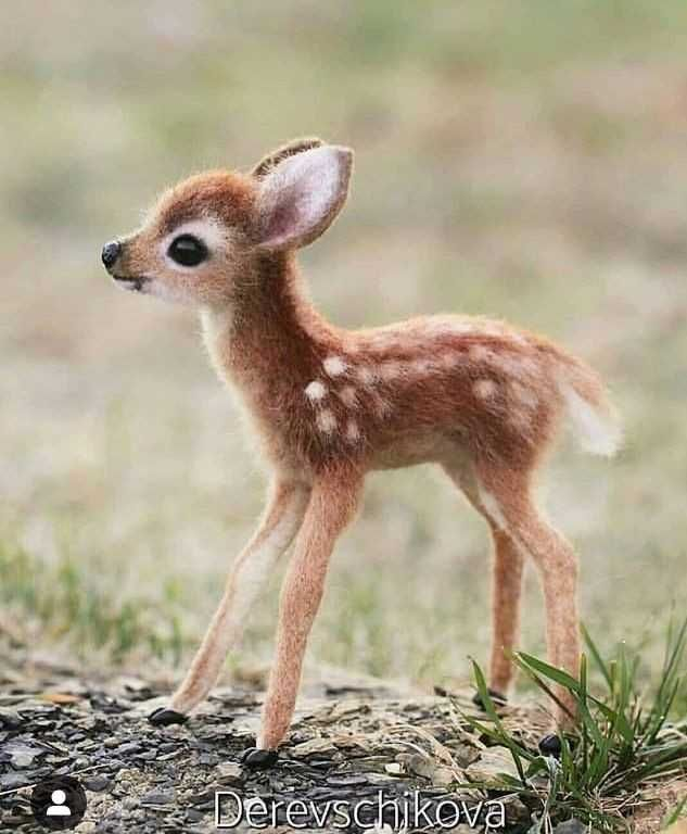 Baby animals ⤵️