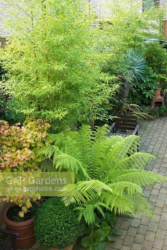 Bamboo Acer Tree Fern And Buxus Plant Design