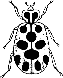 Bugs Black And White Clipart Clip Art Clipart Black And White Black And White Design