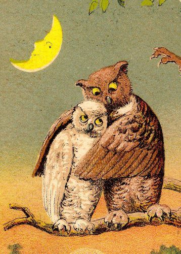 antique owl postcard