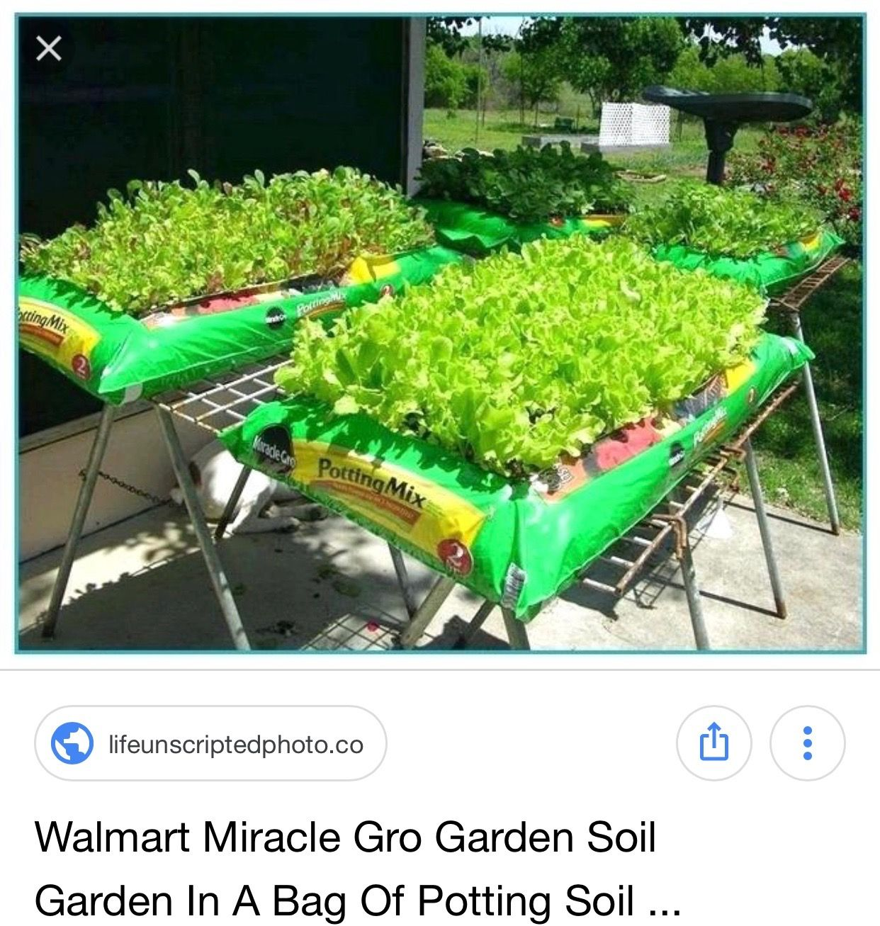 Raised Garden Bed On Saw Horses With Bag Of Potting Soil With
