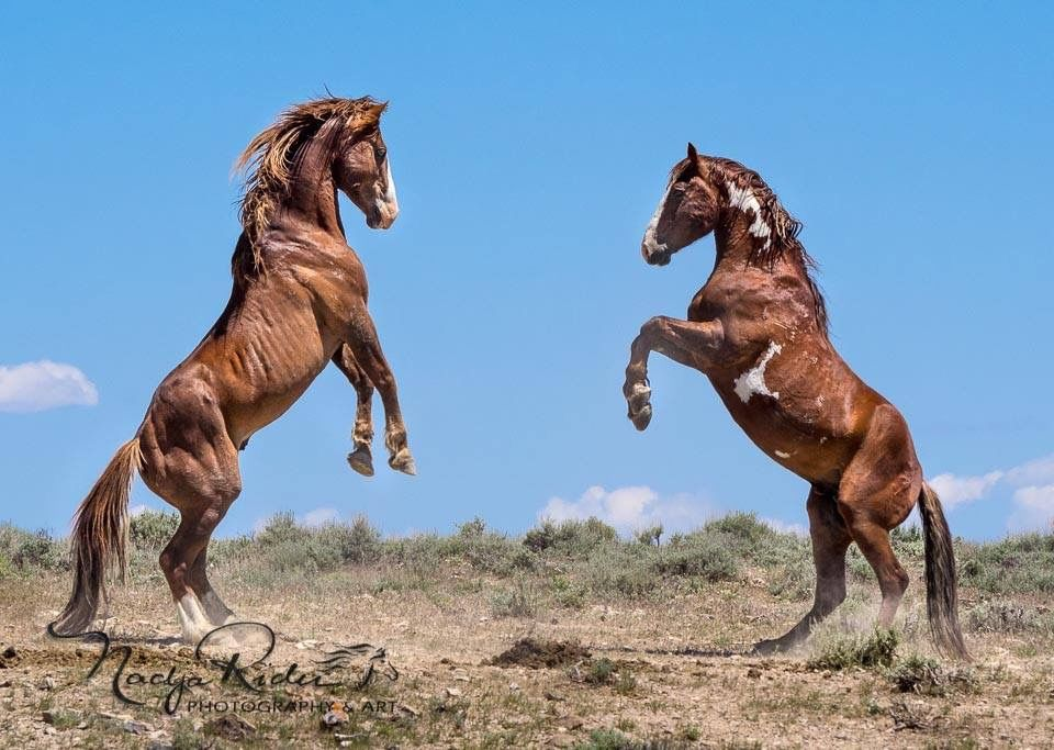 Pin by Mallory M on Mustangs/wild horses Horses, Wild