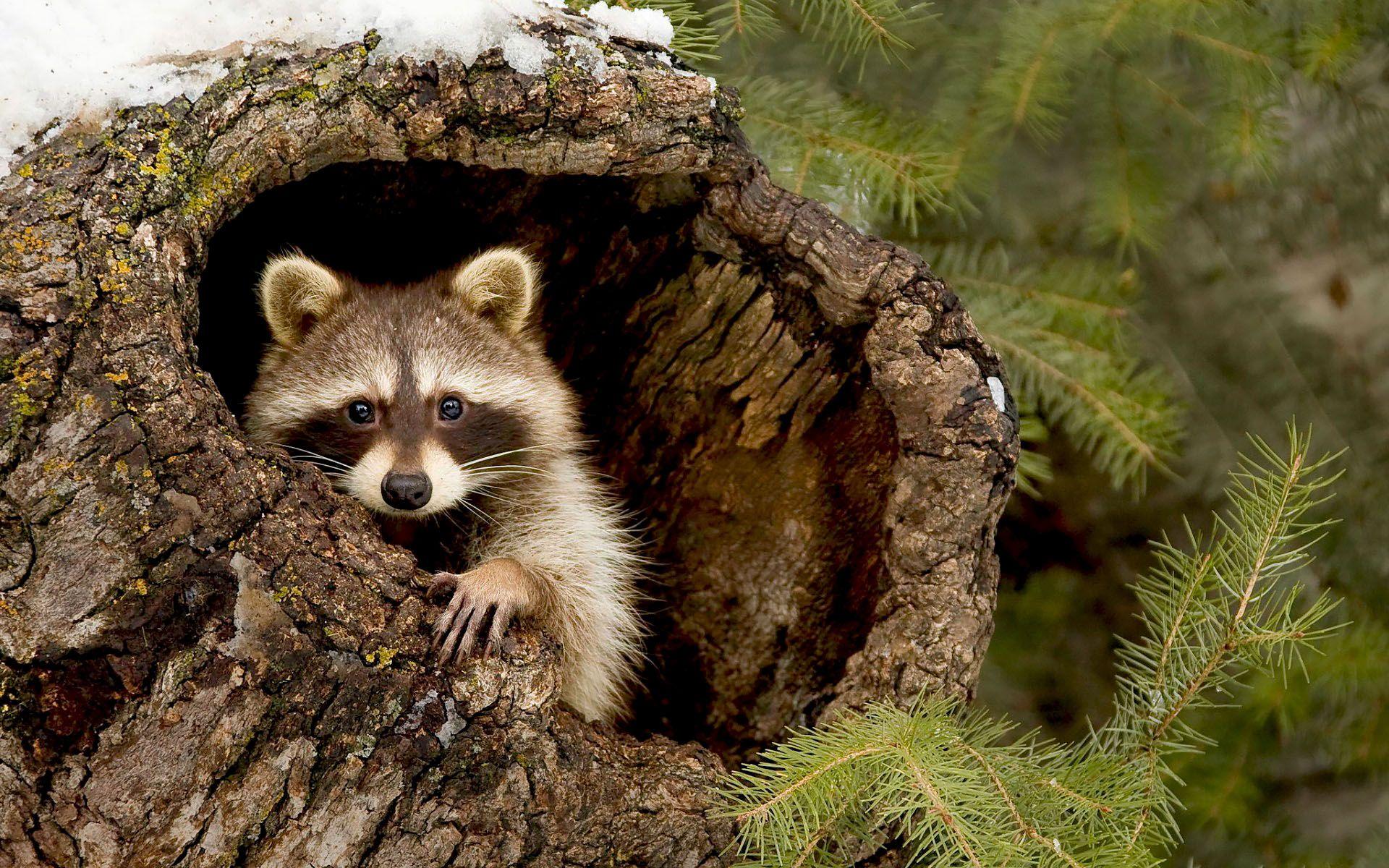 природа америки картинки животных запрос кавычки