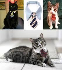 Resultado de imagen para como hacer ropa para gatos paso a paso