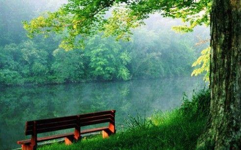 Most Beautiful Green Nature Wallpapers In The World Hd Wallpapers Pemandangan Alam Gajah