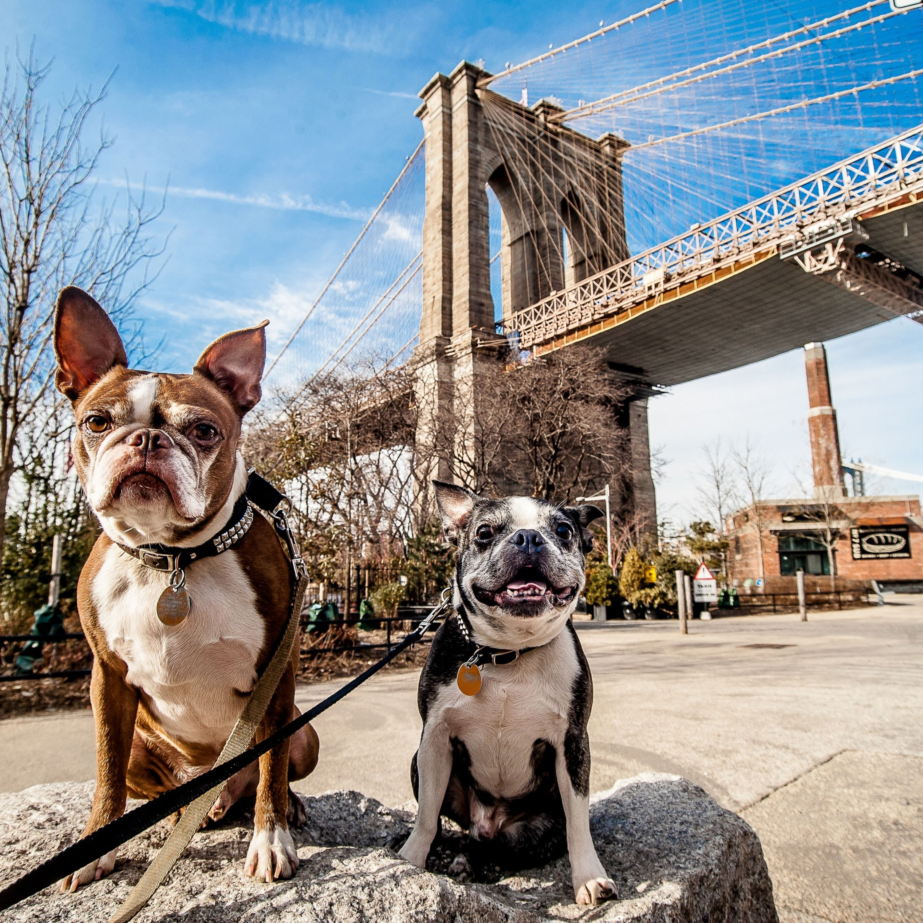 29 Hotels In New York City Where Dogs Stay Free Woofadvisor Blog Dogs Dog Friendly Hotels City Dog