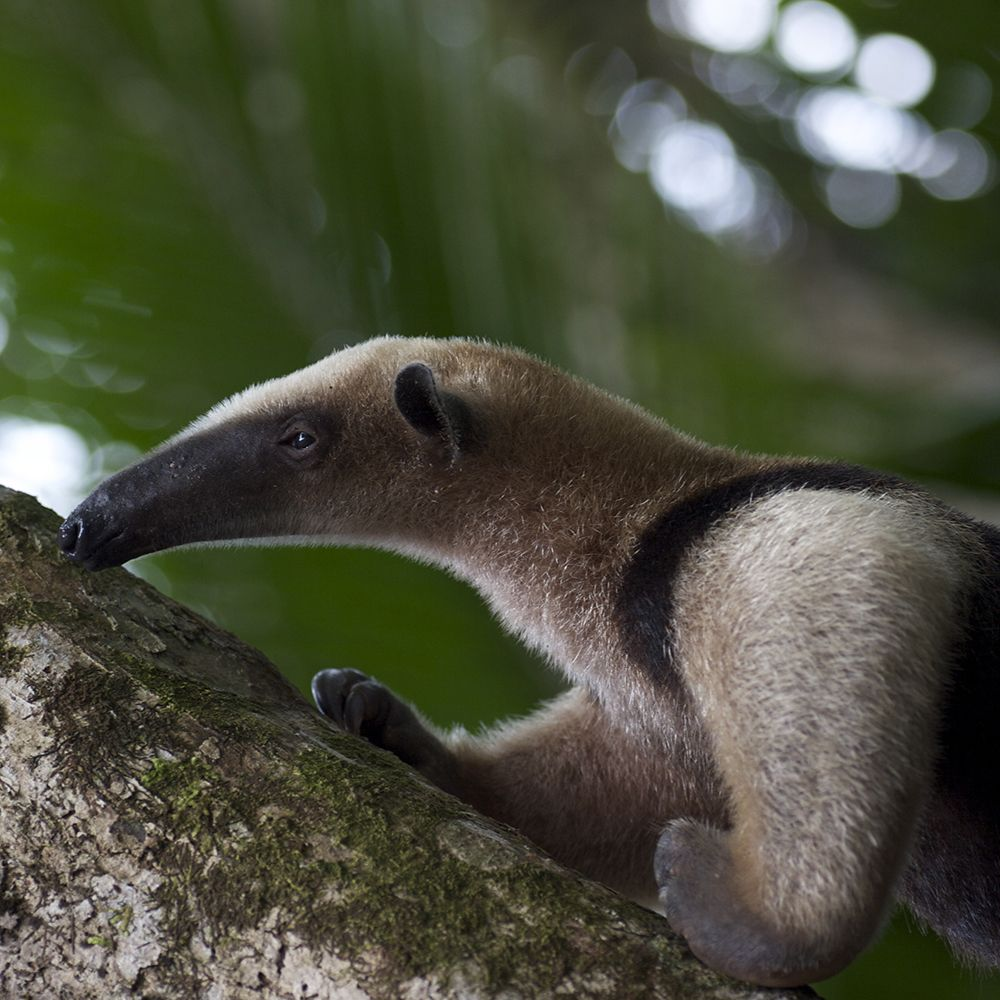 Osa Peninsula Costa Rica Hotels: Explore The Osa Peninsula, Costa Rica's Most Enchanting