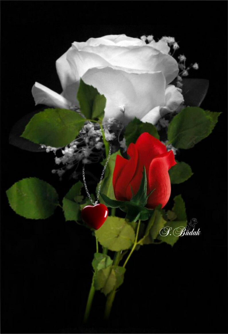 Pin By Rali Barsa On Love Hearts Pinterest Rosas Hermosas