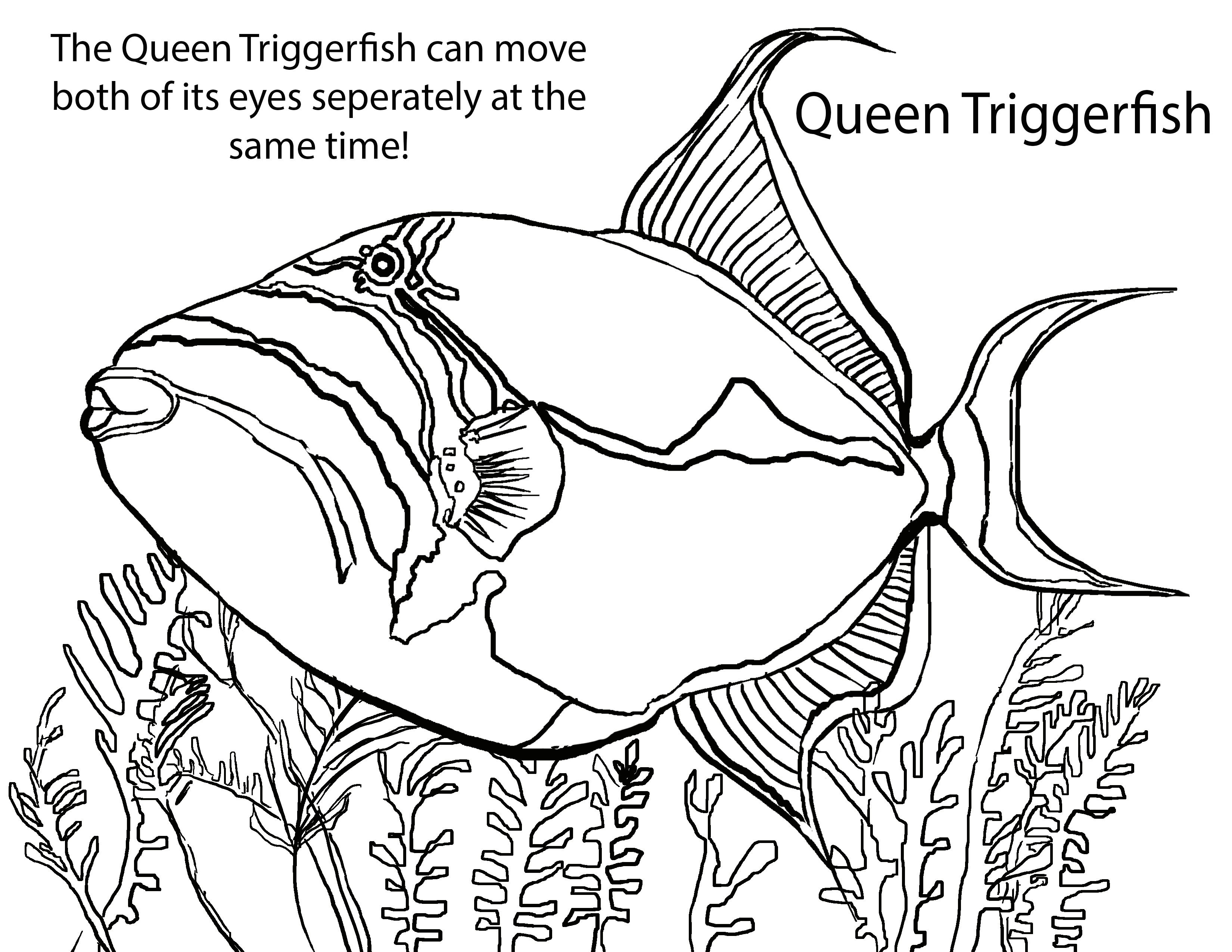 Gracejeanyu Bioventures Coloring Pages Fish Coloring Page