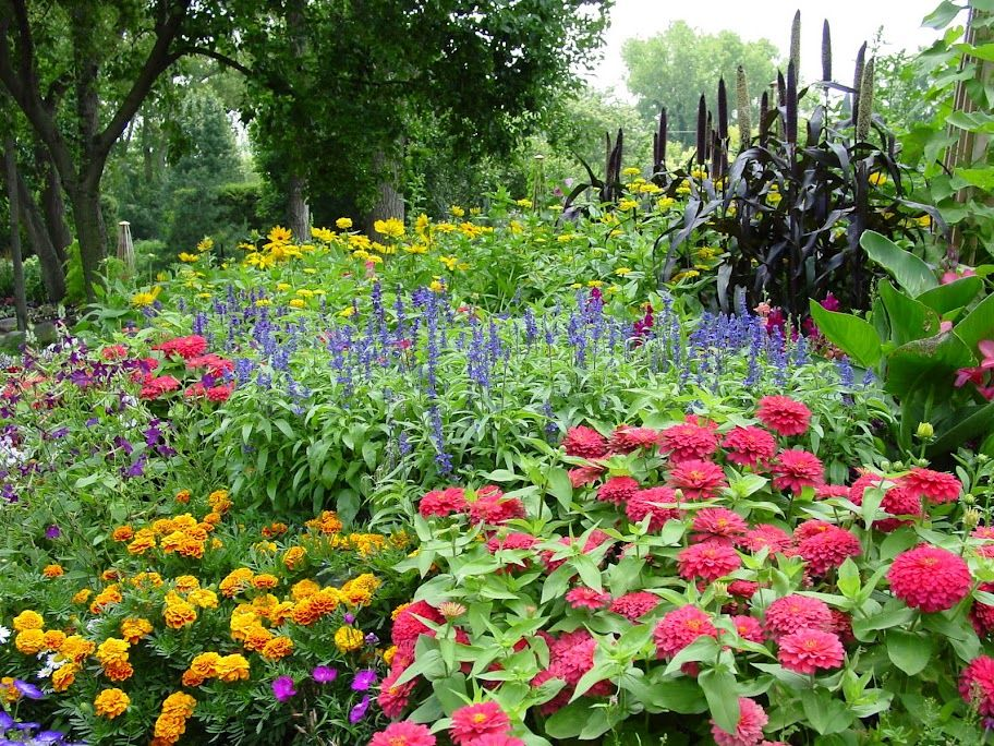 AAS Winners at Rotary Gardens, Janesville, WI