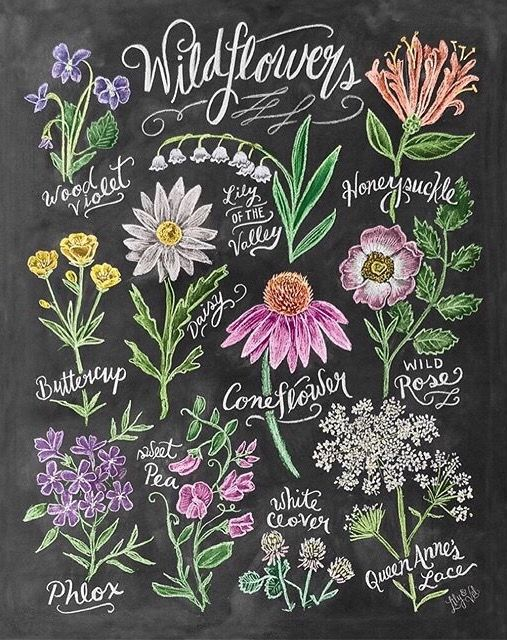 Alpenstrasse #wildflowers