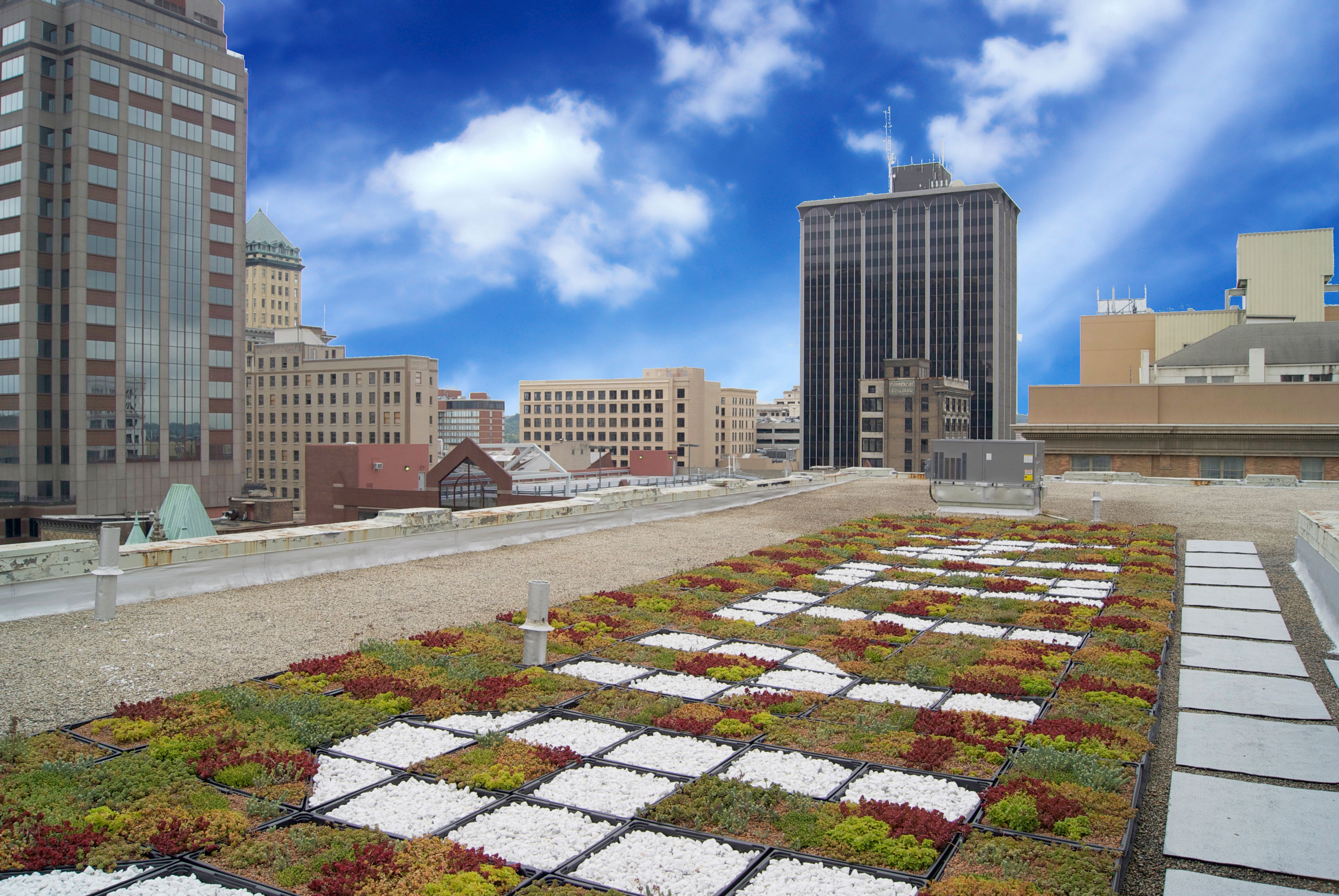City Hall's green roof. Learn why it's good for our city's environment by clicking here. #GreenDayton