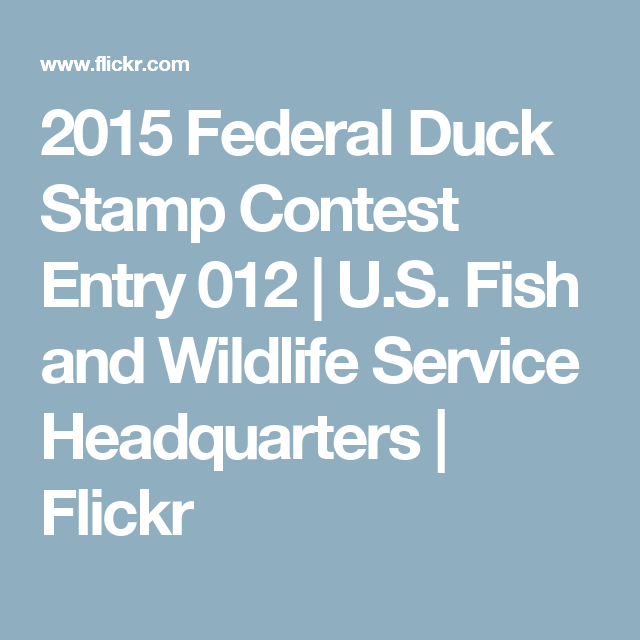 2015 Federal Duck Stamp Contest Entry 012 | U.S. Fish and Wildlife Service Headquarters | Flickr