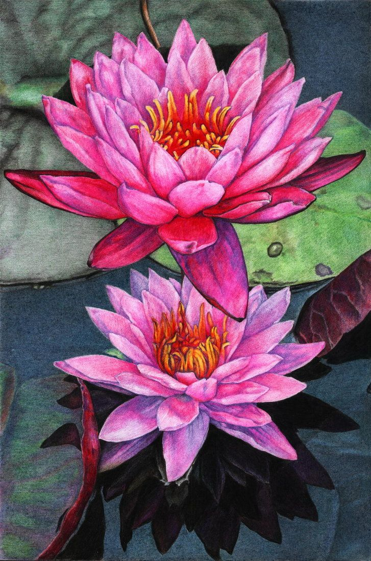 lotus by naglets on DeviantArt Lotus flower painting