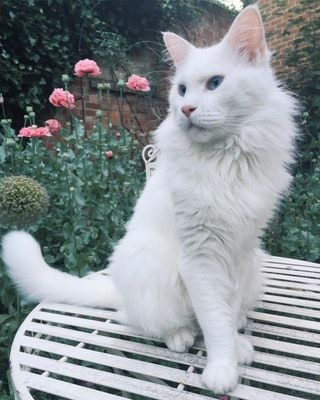 our cat is better looking than most people  aww  cats