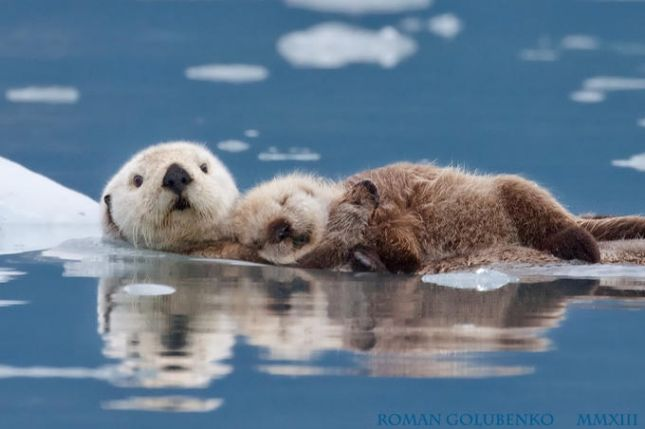 seaotters02