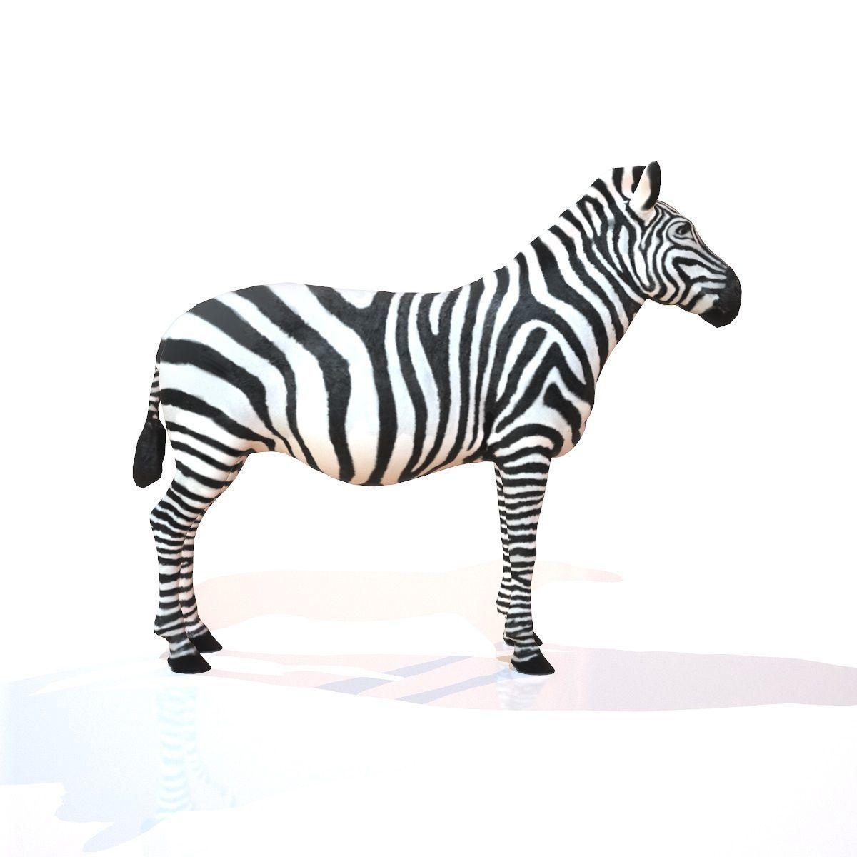 Zebra 3d Model Zebra Animals 3d Model