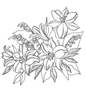 Lily Flowers Coloring Page And Many Other Free Images Here
