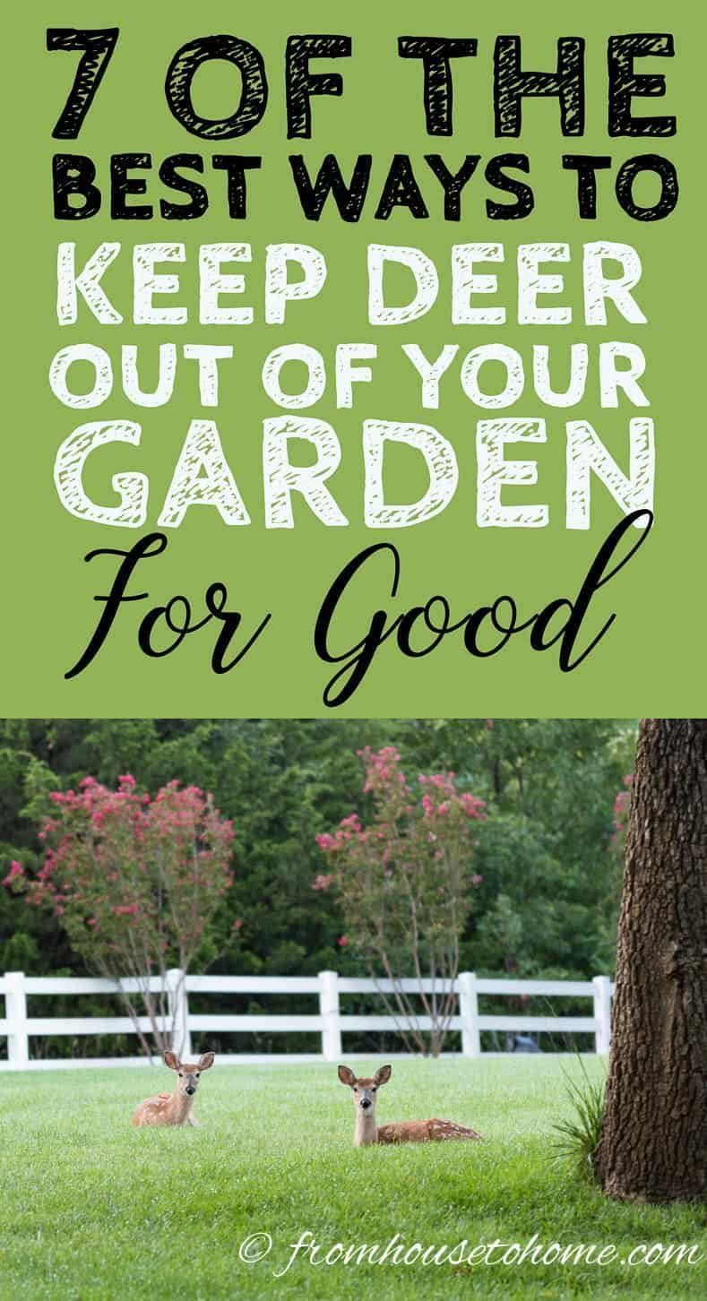how to keep deer out of your garden for good | garden pest
