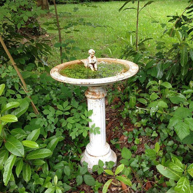Wondering around the garden. A little bird bath look so pretty. I got some food for the birds too 🙋🙋 #myfrenchlife #myhomeinfrance #myfrenchcountryliving #frenchgarden #birdbath #프랑스시골이야기 #프렌치앤틱 #프렌치홈