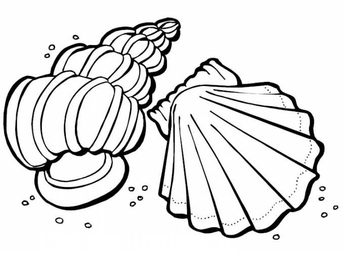 Free Printable Seashell Coloring Pages For Kids Coloring Pages Ocean Coloring Pages Summer Coloring Pages