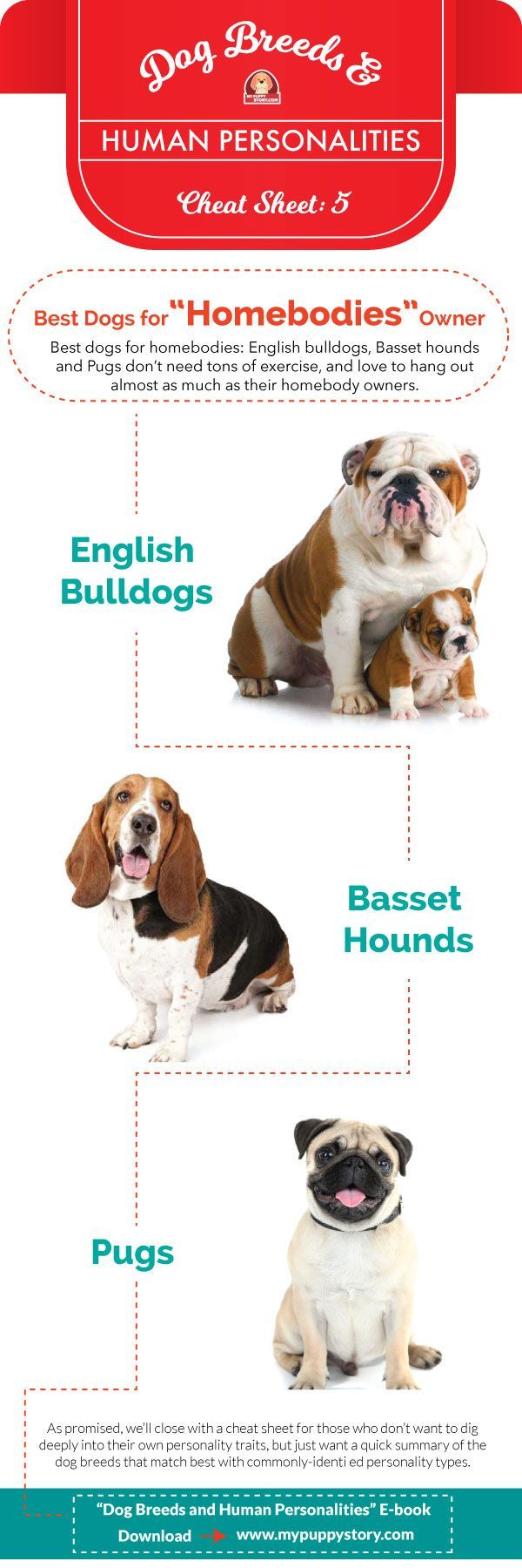Dog Breeds Vs Human Personalities Dog Breeds Dogs Human