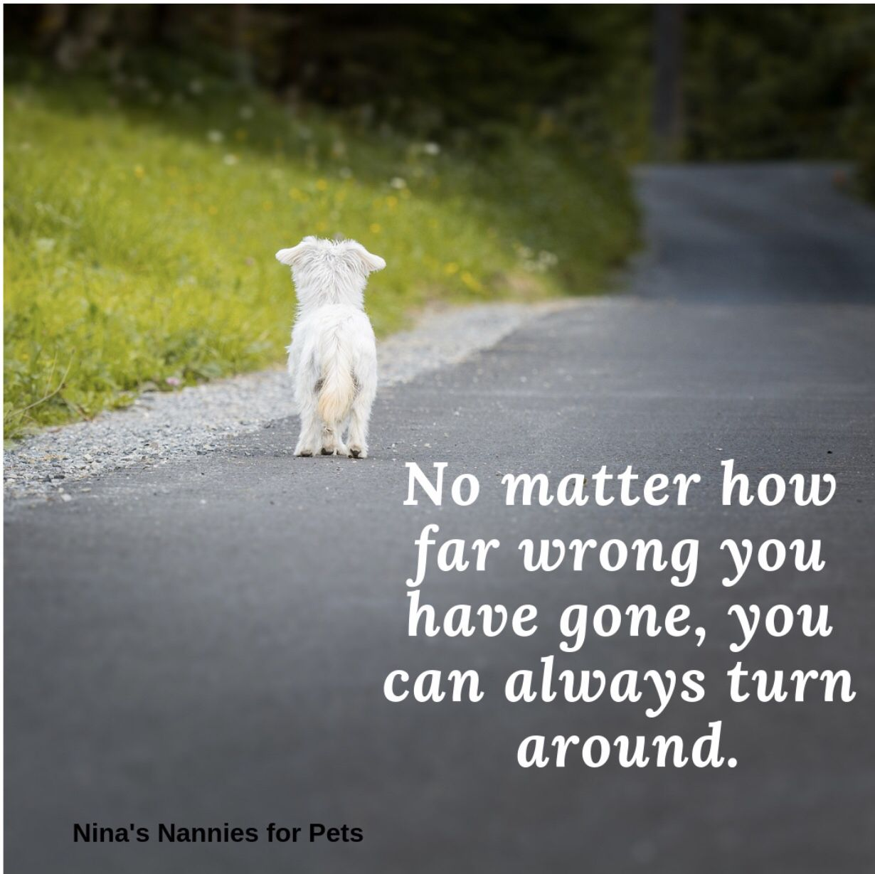 Thought For The Day Pet Sitters Dog Sitting Pets