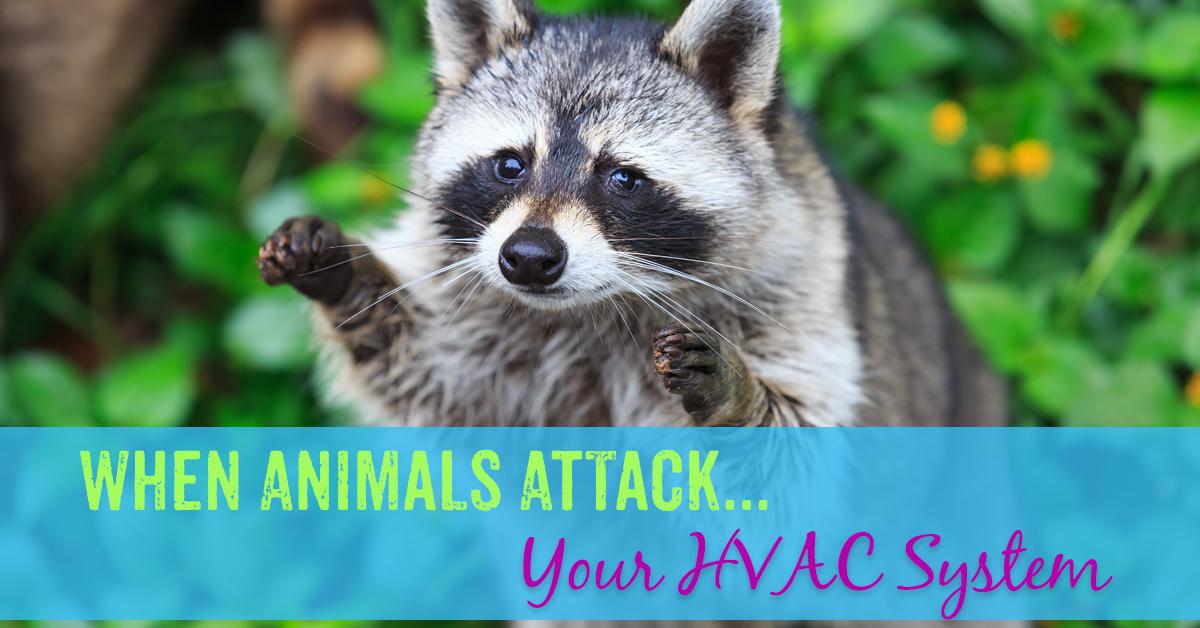 When Animals Attack Your Hvac System Animal Attack Hvac Hvac