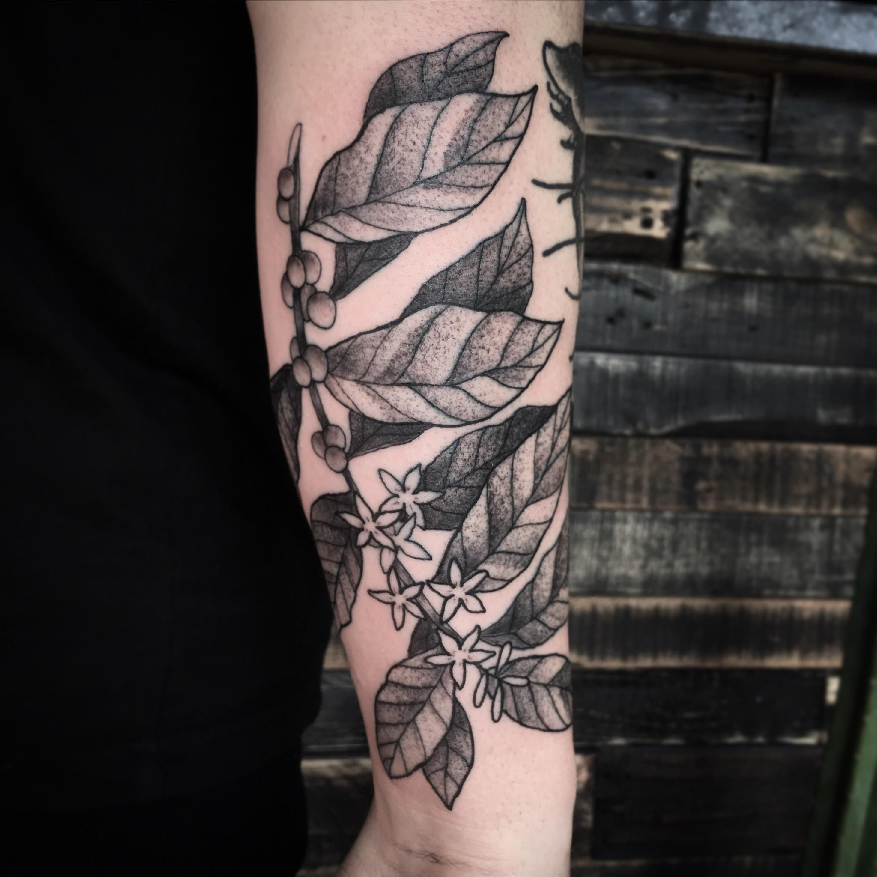 Coffee Plant James Venice Sacred Serpent Tattoo Melbourne Serpent Tattoo Coffee Plant Melbourne Tattoo