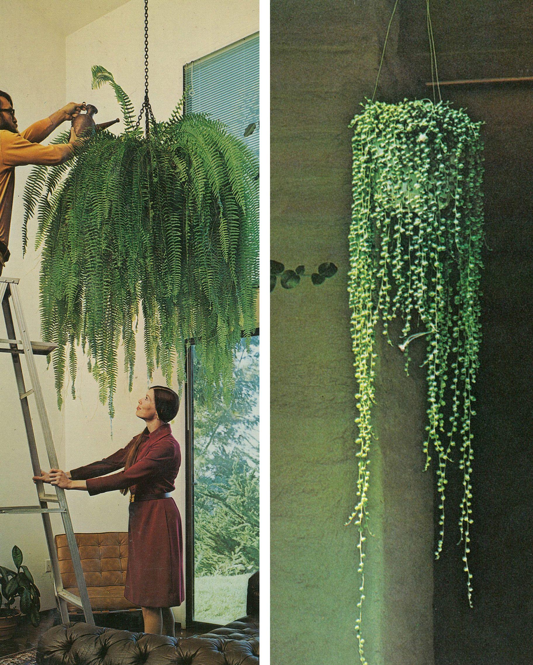 Guest Post Hanging Gardens Jardineria y plantas