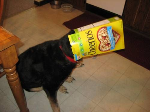 Veterinarian Roved Healthy Dog And Cat Treats Can Dogs Eat
