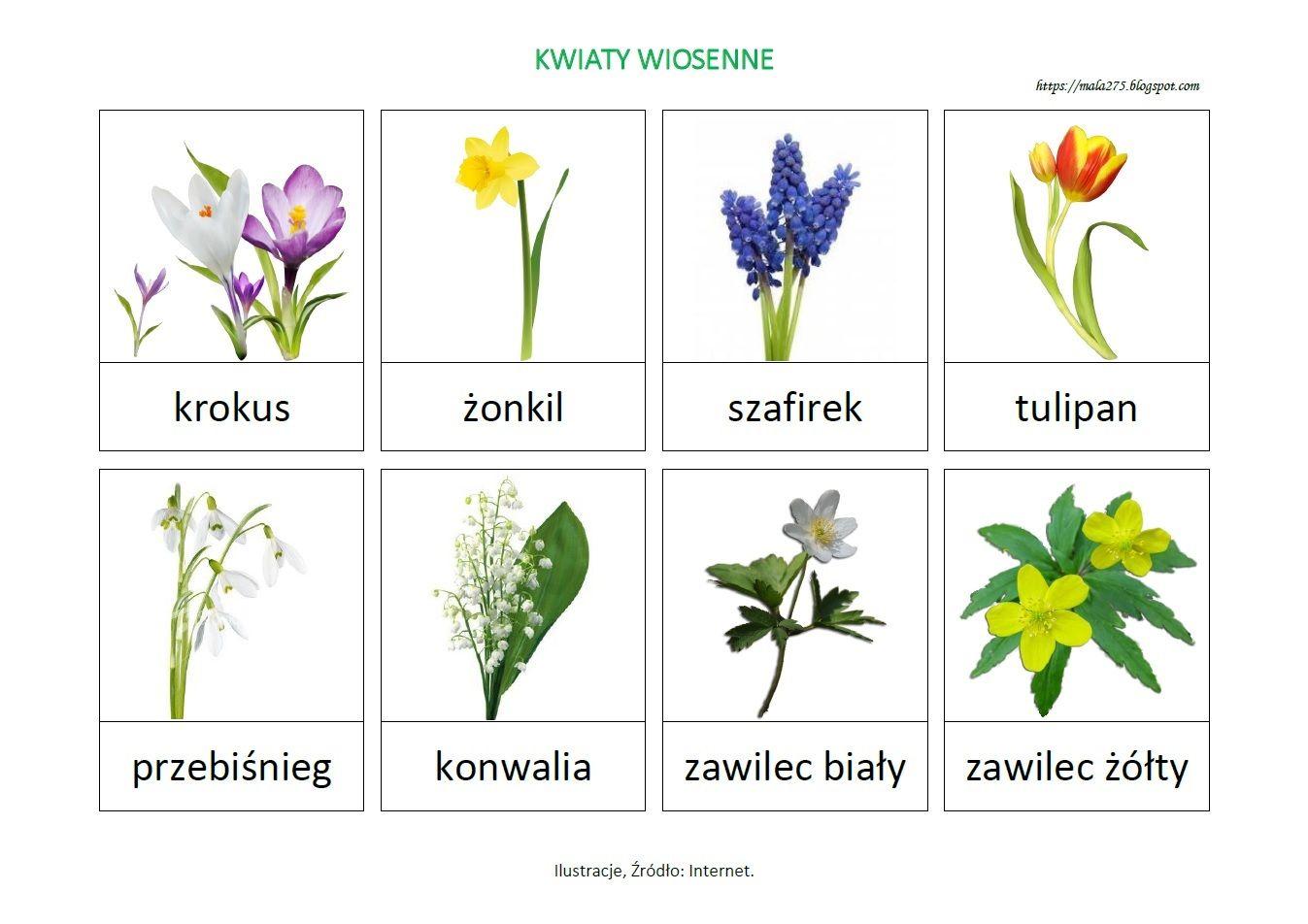 Blog Edukacyjny Dla Dzieci Kwiaty Wiosenne Plansza Montessori Projects Math Activities Preschool Plant Lap Book