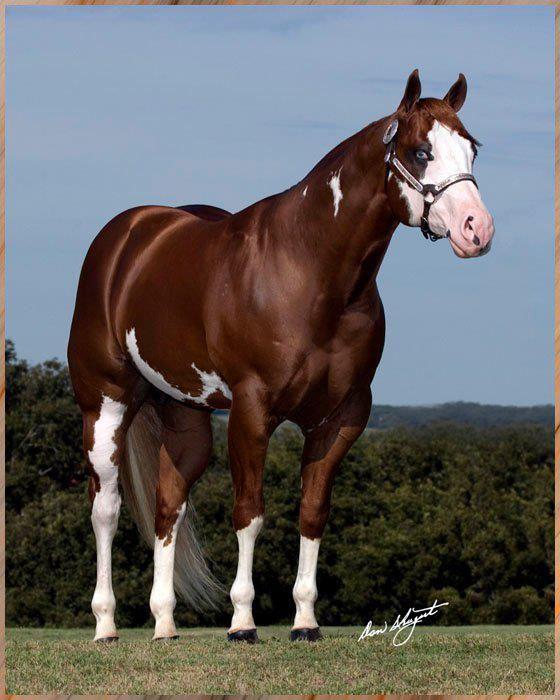 LOS CUARTO MILLA... De PAMPA VASCA Caballos | Caballos / Horses ...