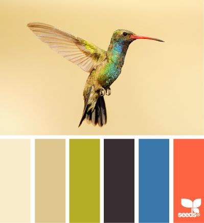 Colibri Paletas De Colores Esquema De Colores Juego De Colores