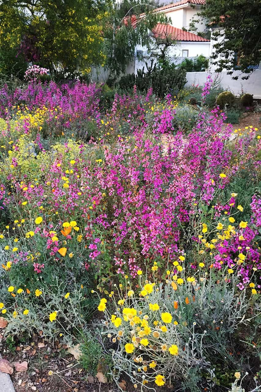 Pin By Shannon Curren On Corinth 2 0 Garden Native Plant