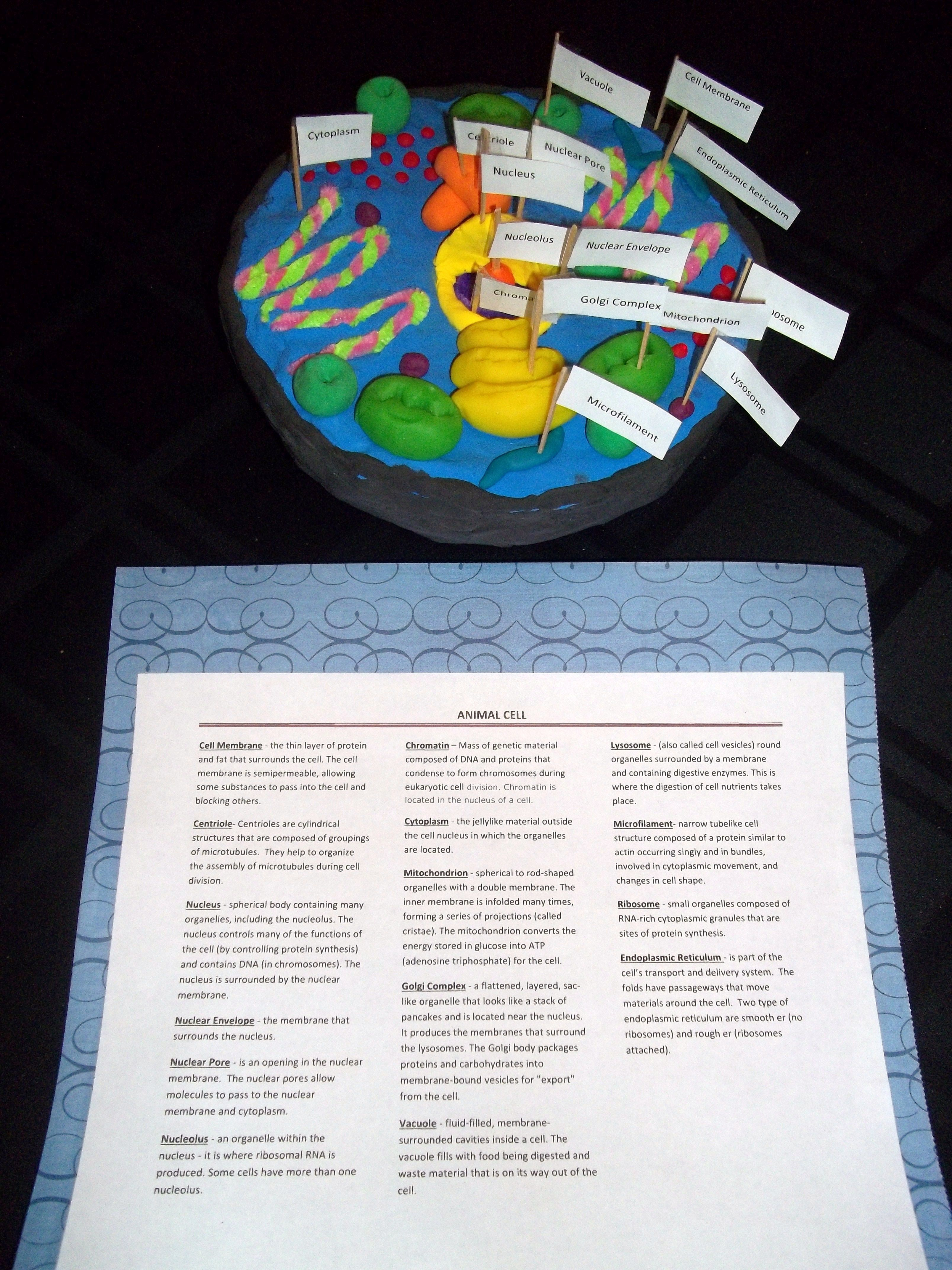 Animal cell model cake labeled
