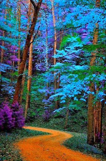 Blue trees path Great Smoky Mountains National Park