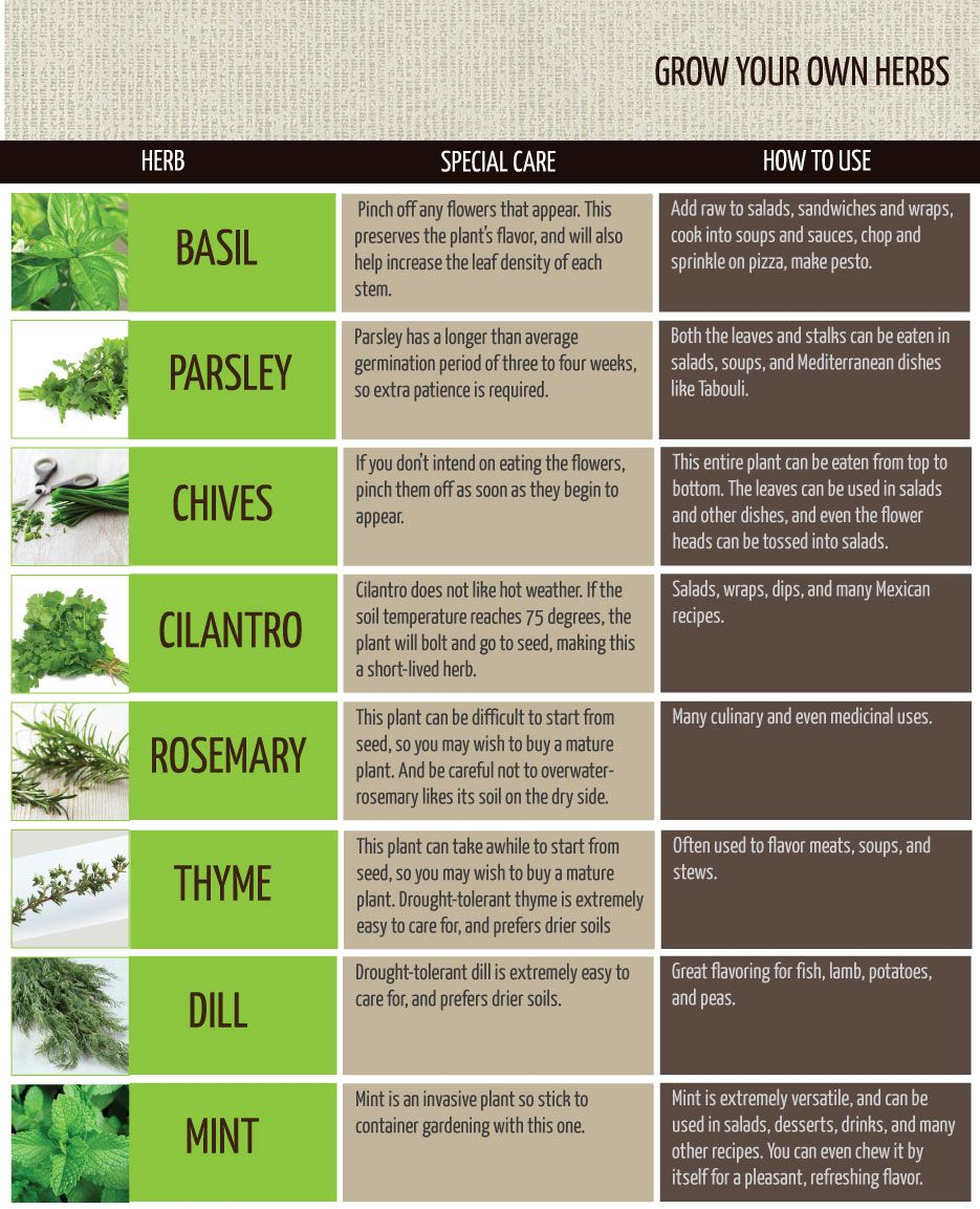 Herb Growing Tips