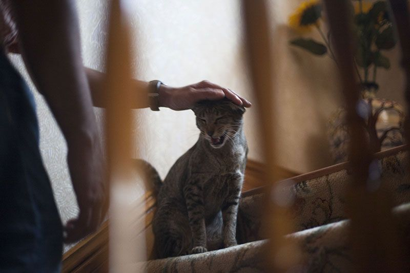 Cat Meows Cries At Night Troubleshoot Guide Solutions How I Fixed This Cat Meowing At Night Cat Training Cat Crying