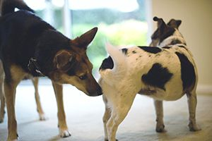 Why Do Dogs Sniff Butts Petsmart Dog Training Animal Shelters Near Me Dogs