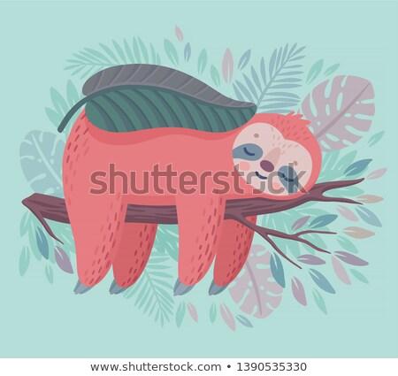 Cute hand drawn sloth sleeping in the jungle. Lazy animal