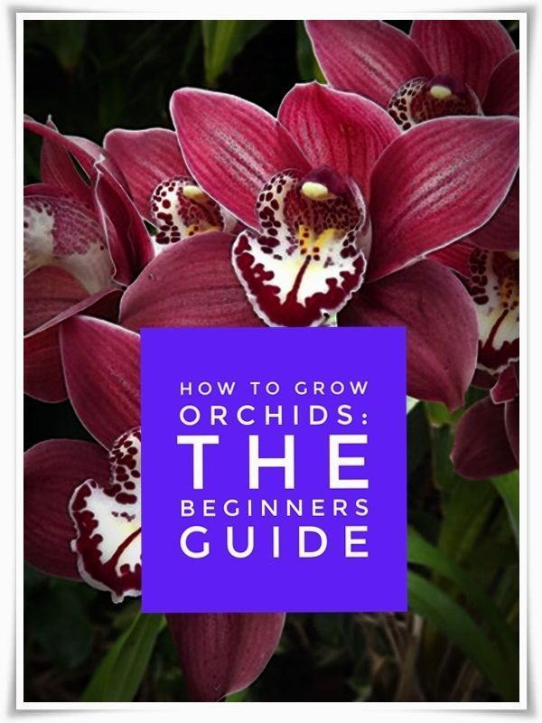 Growing Orchids in Your Garden - Orchid Guide #growingorchids
