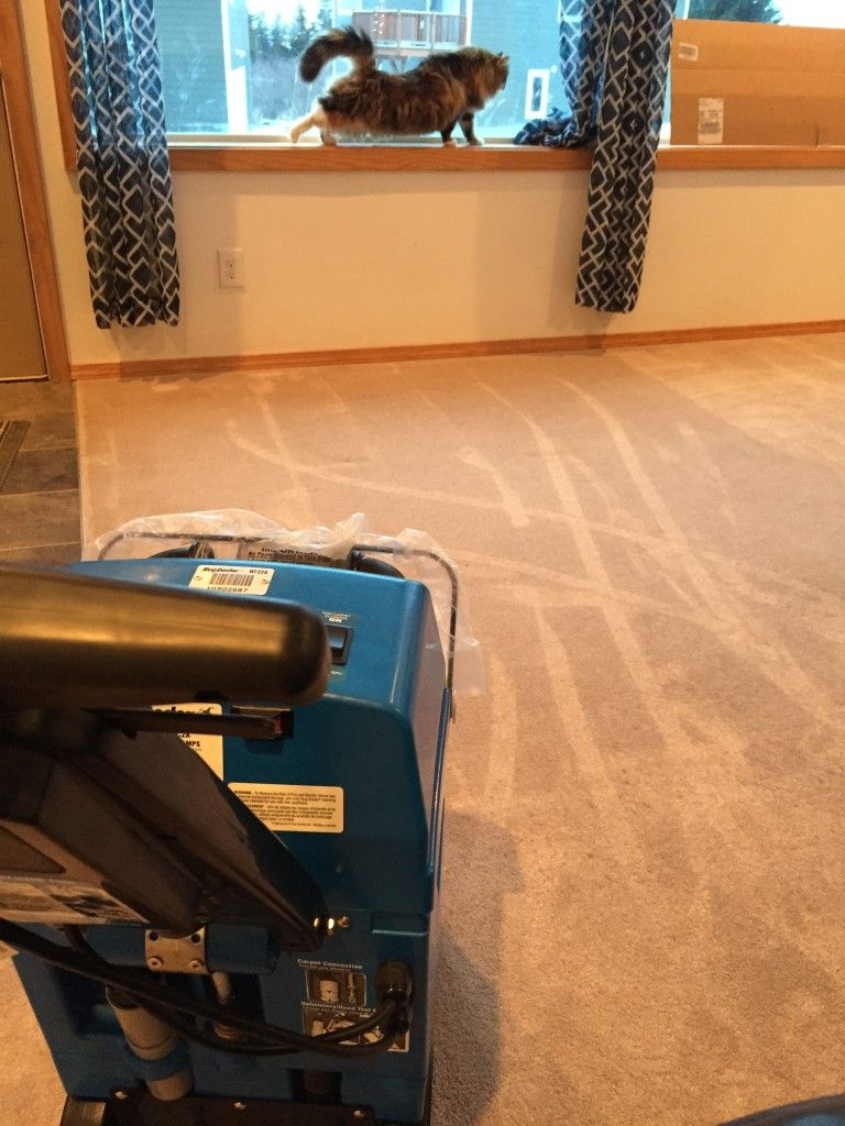 clean carpet rug doctor Google Search How to clean