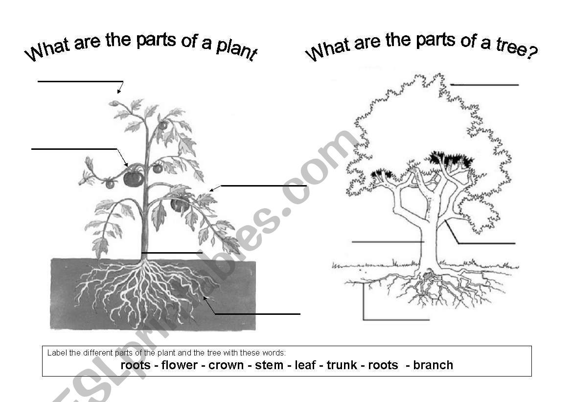 A Worksheet To Learn The Different Parts Of A Plant And A
