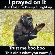 One Monkey Dont Stop No Show Memes Google Search Crushin On A