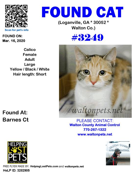 FOUNDCAT Shelter ID 3249 Loganville (Barnes Ct) GA