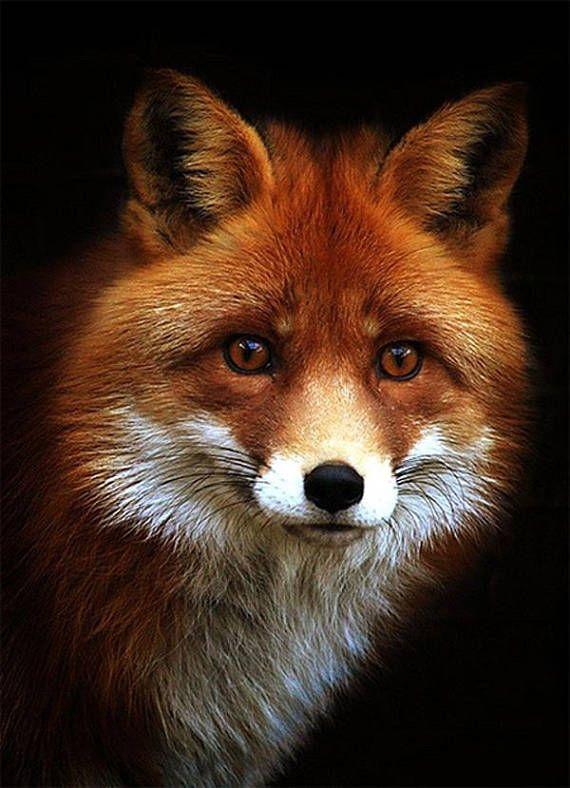 Photo of Beautiful Red Fox Portrait Cross Stitch Pattern, 14 ct Aida
