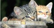 Traitement naturel anti-puce du chat ou du chien